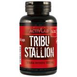 Tribu Stallion