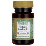 Coleus Forskholii 500 mg